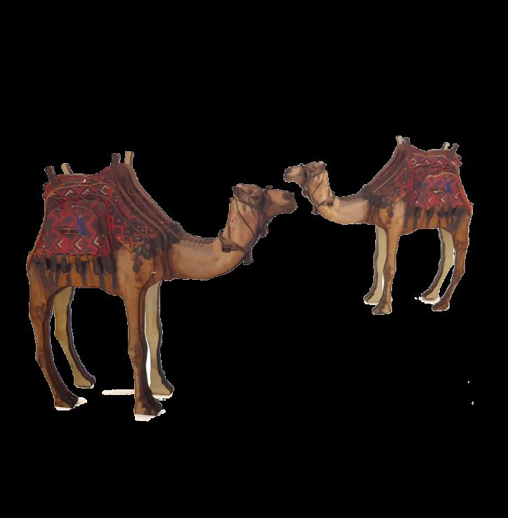 Desert Camel – colored