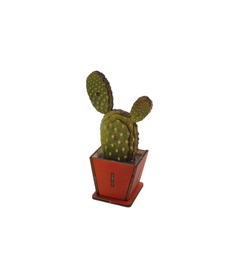 Cactus – Sabra C – colored