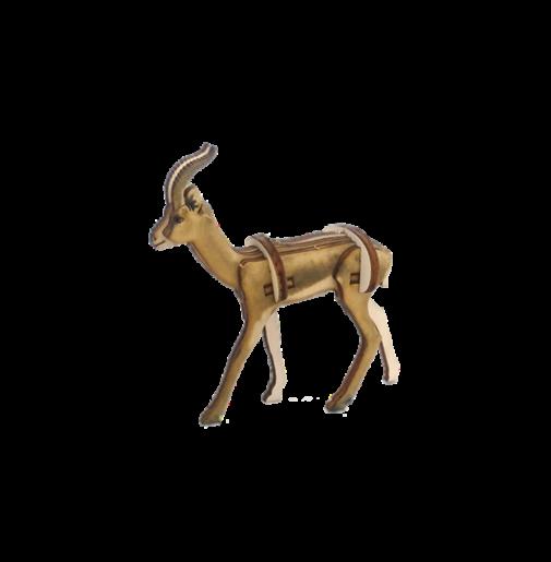 Gazelle Dorcas / colored