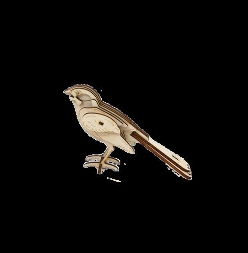 Israeli Common Bird (DIY)