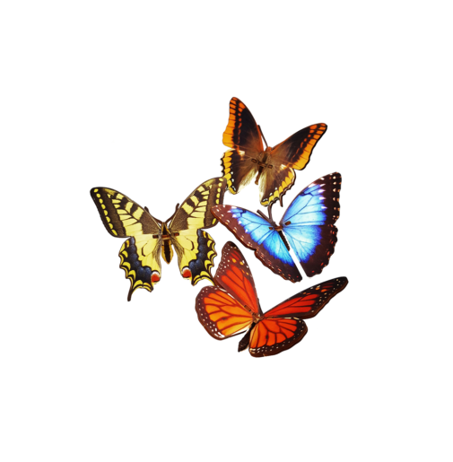 Pack of 4 Butterflys