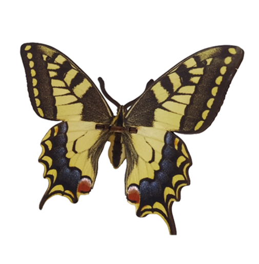 Butterfly – Papilio Macahon – Yellow