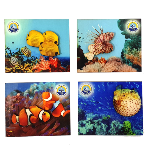 Ocean A – set of 4 magnets