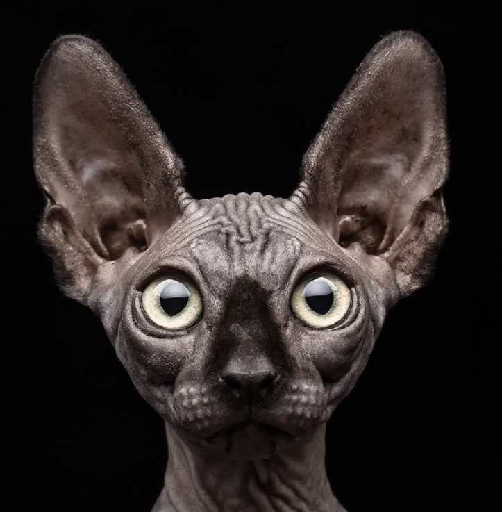 Sphynx cat 3D portrait