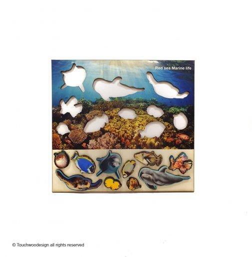 Red Sea Marine Life