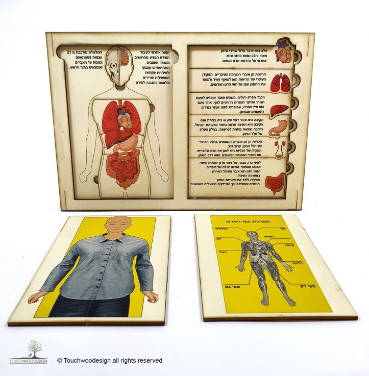 Organ Anatomy