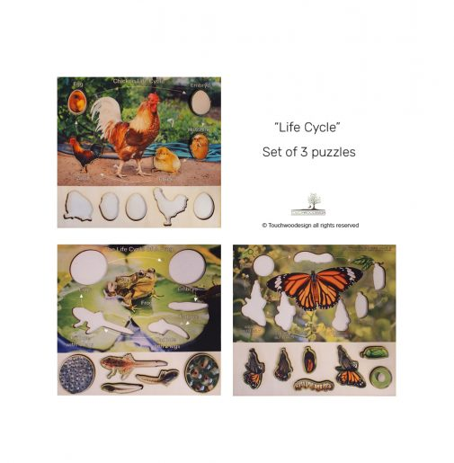 Set of 3 Life Cycles – Butterfly, Frog & Chicken