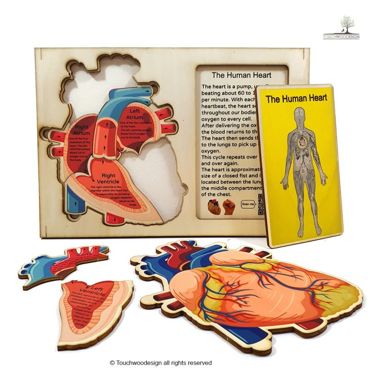 The Human Body – Set of 3 puzzles